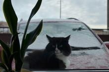 Black Cat Outside The Window ...