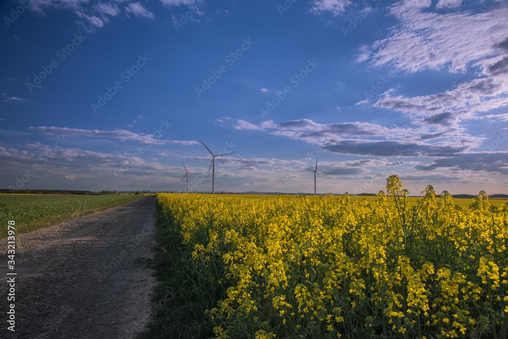Fototapeta Pejzaż  w wiosenne popołudnie. Wiatraki na rzepakowym polu.
