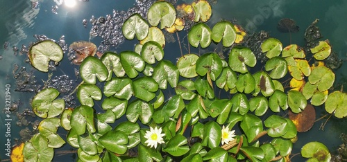 Canvas-taulu Directly Above View Of Lily Pads Floating On Water In Pond