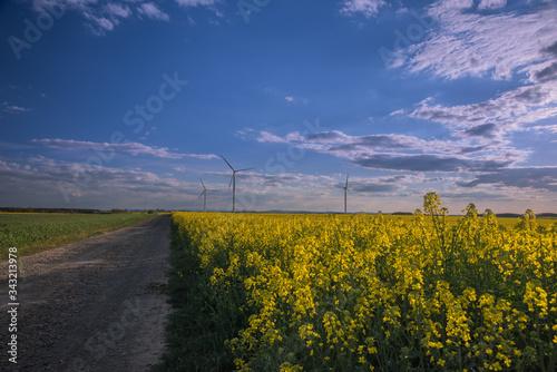 Fototapeta Pejzaż  w wiosenne popołudnie. Wiatraki na rzepakowym polu. obraz