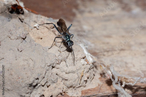 Photo Close-up Of Insect On Anthill