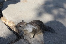 High Angle View Of Squirrel Lo...