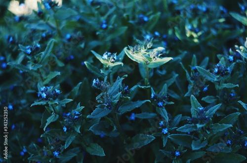 Fotografía Arbusto venenoso