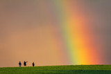 Fototapeta Tęcza - Landscape right after a rain, colorful rainbow over a grassy meadow with young peoples on a walk.