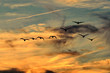 Low Angle View Of Silhouette Birds Flying Against Cloudy Sky During Sunset