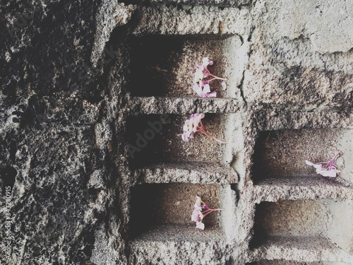 Photo Flowers In Wall Alcove