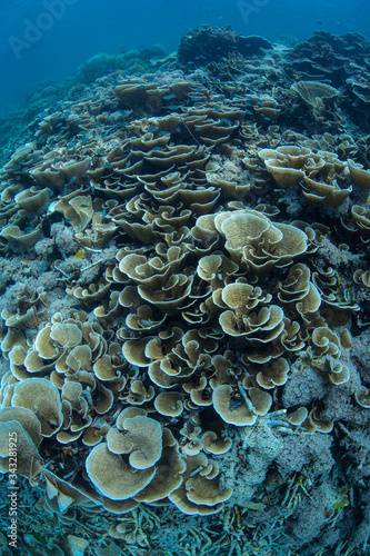 Healthy yet fragile coral reefs abound throughout the incredible islands of Raja Ampat, Indonesia Wallpaper Mural