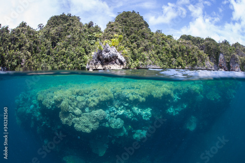 Photo Healthy coral reefs abound throughout the incredible islands of Raja Ampat, Indonesia