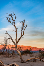 Dead Tree And Sand Dunes On A ...