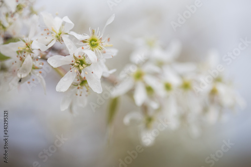 Fototapety, obrazy: Close-up Of White Flowers