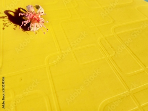 Dry sepals and anthers of  rose flower on a bright yellow background Wallpaper Mural