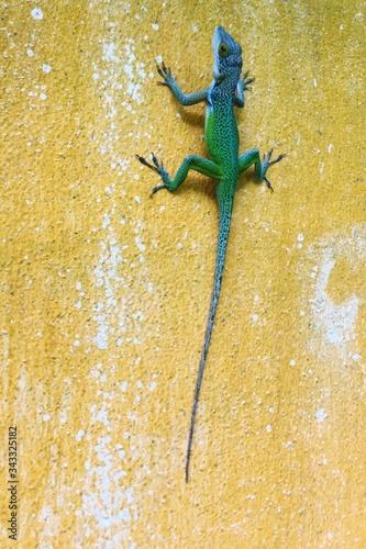Fototapeta Close-up Of Chameleon On Wall