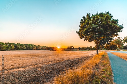 Scenic View Of Agricultural Field Against Sky During Sunset - fototapety na wymiar