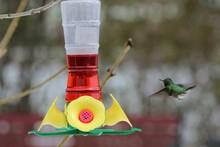 Close-up Of Hummingbird And Bird Feeder