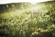 Wildflowers In Meadow
