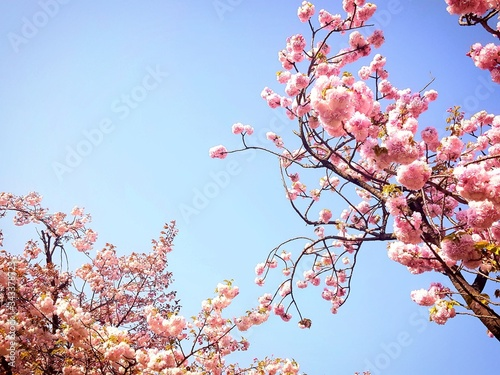 Foto Low Angle View Of Pink Flowers Blooming On Tree