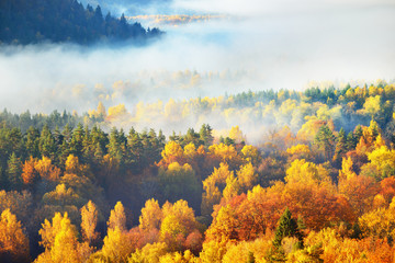 Panel Szklany Drzewa Breathtaking panoramic aerial view of the hills of colorful red, orange and yellow trees in a mixed coniferous forest in a morning haze. Fairy autumn landscape. Gauja national park, Sigulda, Latvia