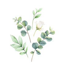 Watercolor Vector Card With Eucalyptus Leaves And Roses.