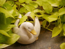 Close-up Of Duck Statue By Plants