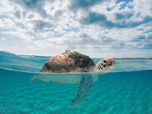 Imaginary Fictional Dreamy Sea Landscape With A Sea Turtle Getting Castelsardo Town To Safety. Cloudy Blue Sky And Underwater Scene. Visionary Place Background With Copy Space