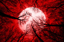 Horror Forest Background, Full Moon Above Trees, Apocalyptic Scene