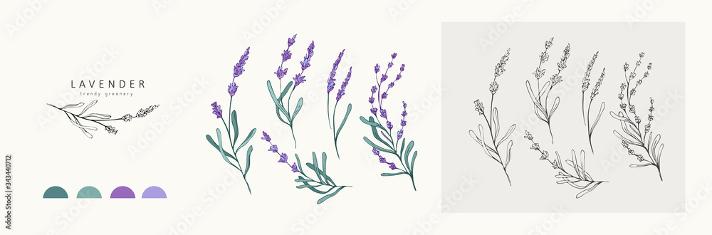 Fototapeta Lavender logo and branch. Hand drawn wedding herb, plant and monogram with elegant leaves for invitation save the date card design. Botanical rustic trendy greenery