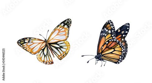 Fotografie, Obraz Watercolor monarch butterfly
