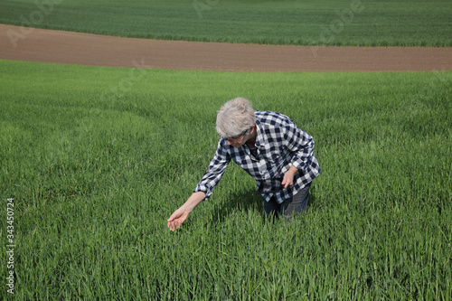 Photo Female farmer or agronomist inspect quality of green wheat plants in field using