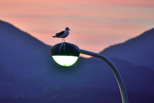 Seagull Perching On Lamp Post ...