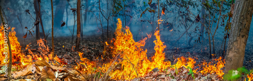 Photo forest fire disaster is burning caused by humans