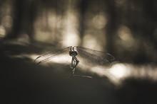 The Beautiful Grasshopper In T...