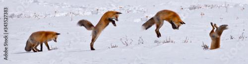 Photo Fox in Flight