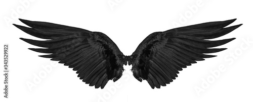 Cuadros en Lienzo black wing isolated on white background.