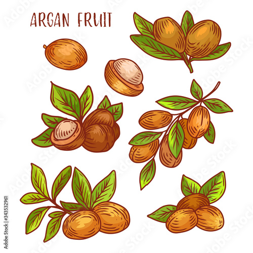 Argan fruits, plant branches sketch icons, vector Canvas Print
