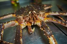 Fresh Raw Edible Brown Sea Cra...