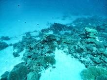 Coral Reef On Ocean Floor