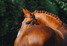 Beautiful Stallion Portrait
