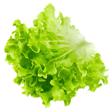 Salad, Lettuce Leaf, Isolated On White Background, Clipping Path, Full Depth Of Field