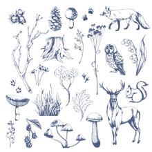 Nature Hand Drawn Vector Sketch. Collection Of Forest Plants And Animals. Mushroom, Grass, Hazelnut, Berries, Cones, Fox, Deer, Owl, Squirrel.