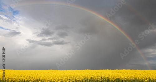 Fotografie, Tablou Spring. Colza. Seeds. Oil. Field. Stormy. Sky