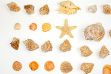 Starfish And Shells On A White...