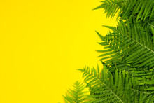 Fern Leaves Or Palm Trees On A...