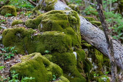 Close up of rick stone and fallen tree trunk covered with green moss int the for Canvas-taulu