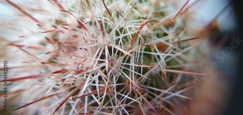 Fotografia primo piano cactus