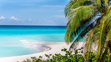 Paradise Beach With Palms And ...