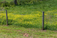 Fence Separating Cut Grass From Lush Grass With Flowers, Grass Is Always Greener, Horizontal Aspect
