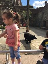 Girl In The Zoo.