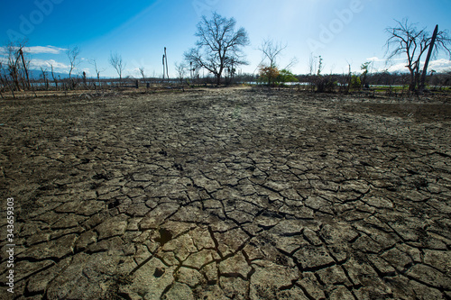 Obraz na plátne Dried cracked earth aridity ground of lake bottom pattern with dry trees and blu