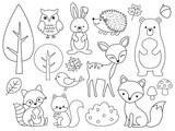 Fototapeta Fototapety na ścianę do pokoju dziecięcego - Vector line set of Woodland Animals. Animal outline for coloring including bear, deer, fox, rabbit, raccoon, squirrel, hedgehog, owl, bird.