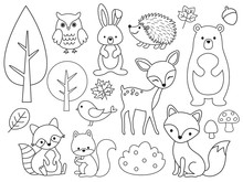 Vector Line Set Of Woodland Animals. Animal Outline For Coloring Including Bear, Deer, Fox, Rabbit, Raccoon, Squirrel, Hedgehog, Owl, Bird.